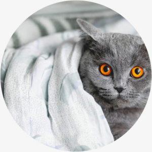 Voordelen katten CBD