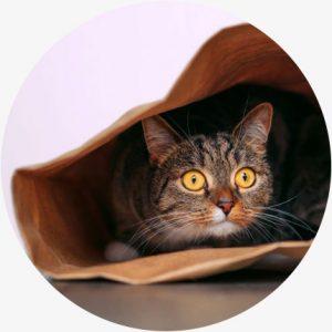 Voordelen cbd katten - minder angst en stress